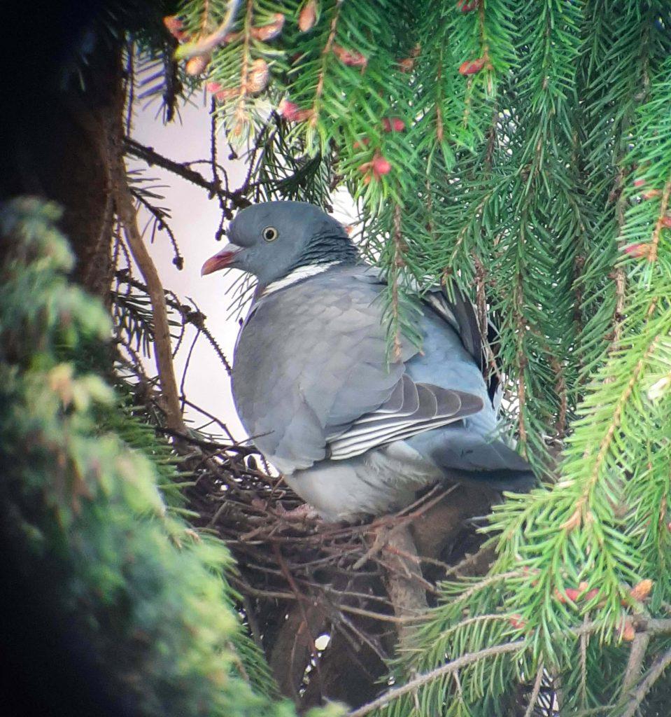 Vogel in mijn tuin